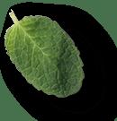 mint-leaves-1a.png